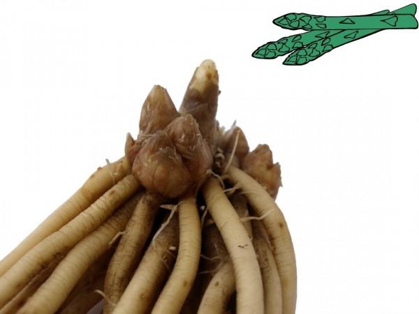 Grünspargel - Steiniva
